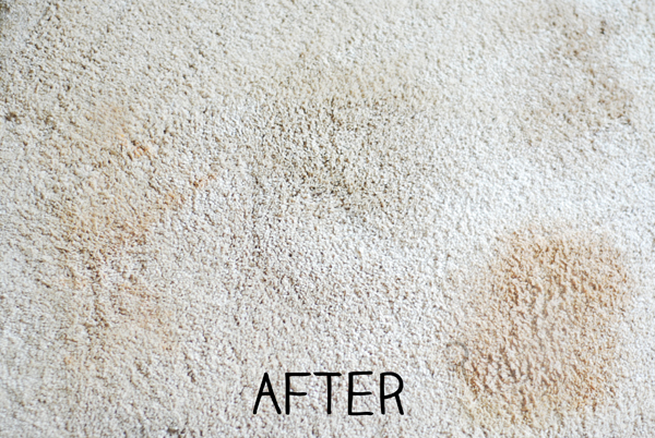 Bacon Grease Out Of Carpet - Carpet Vidalondon